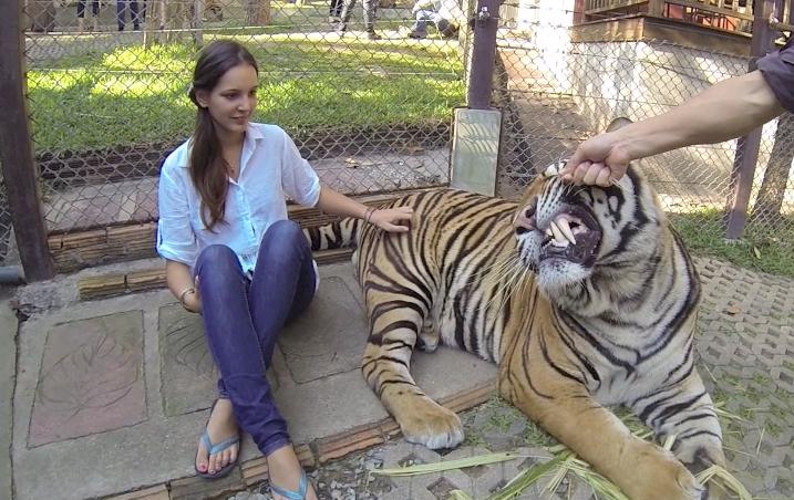 Tiger Kingdom, Video // Chiang Mai Thailand